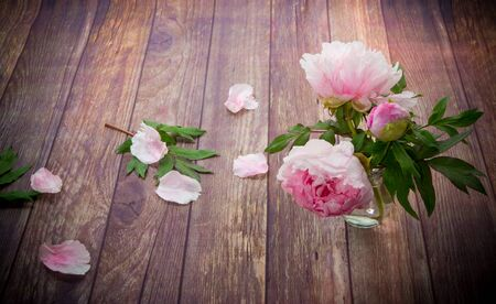 beautiful pink blooming peonies with petals on a wooden table Stok Fotoğraf - 147585873