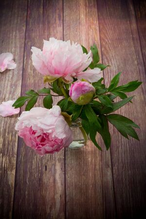 beautiful pink blooming peonies with petals on a wooden table Stok Fotoğraf - 147585067