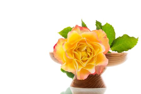 Yellow rose with green leaves, isolation on white Archivio Fotografico