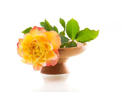 Yellow rose with green leaves, isolation on white Standard-Bild