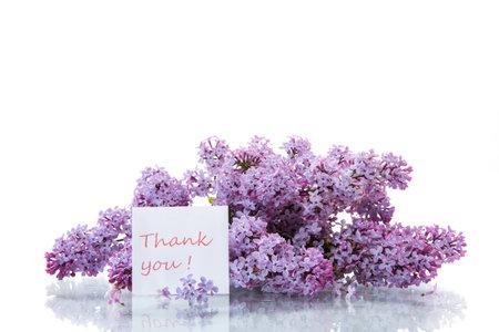 在白色背景隔绝的丁香美丽的春天花花束