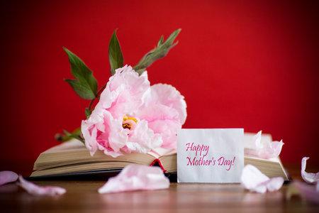 牡丹桃红色美丽的花,与贺卡的书在红色背景
