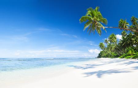 white sand beach: Coastline and Palm Tree