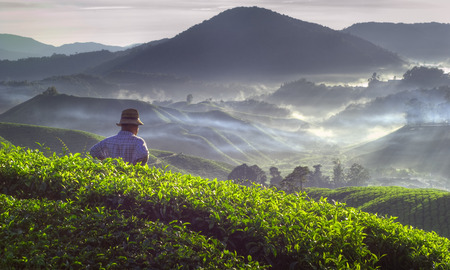 Farmer bij de thee plantage in Maleisië. Stockfoto