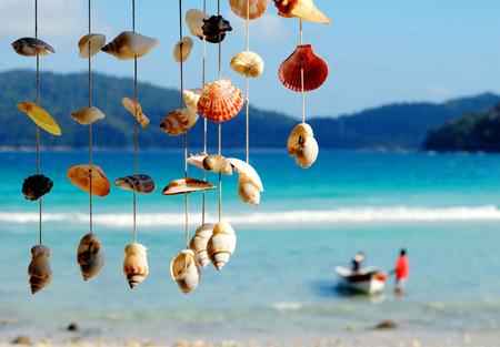 sea animals: Sea shells on the sea shore. Stock Photo