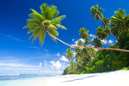 tropical island: Tropical beach destination.
