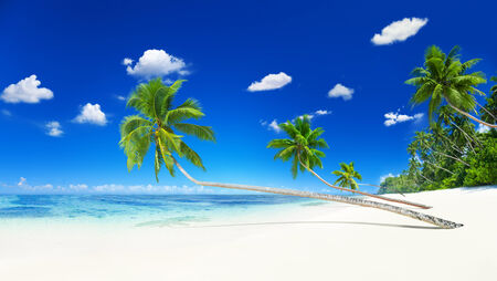 motu: Scenic view of the sea shore with white sand and coconut palm trees.