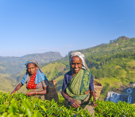Two tea pickers smile as they pick leaves. Stock Photo