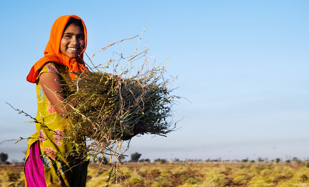 india people: Indian girl working on the farm. near Jaipur, India.