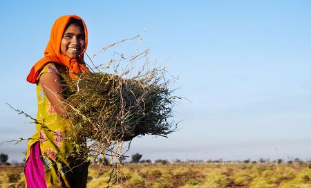 granjero: Ni�a india de trabajo en la granja. cerca de Jaipur, India.