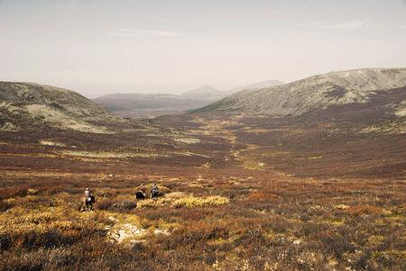 independent mongolia: Three (Tsaatan) boys return to their nomadic home. Mongolia.