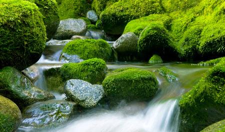 peacefull: Peacefull nature stream, New Zealand.