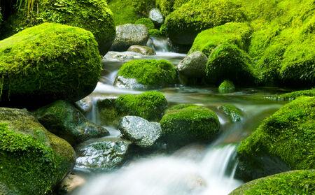 Rustige natuur stroom, Nieuw-Zeeland. Stockfoto