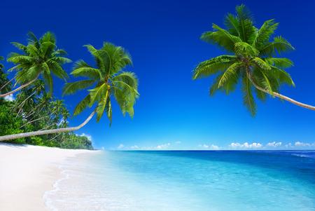 열 대 낙원. 스톡 콘텐츠