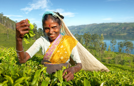Indigenious Sri Lankan tea picker.