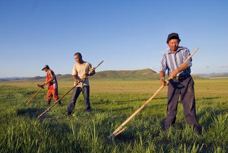 granjero: Tres campesinos mongoles que trabajan duro. Foto de archivo