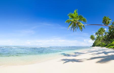 coconuts: Beautiful scenic beach. Stock Photo
