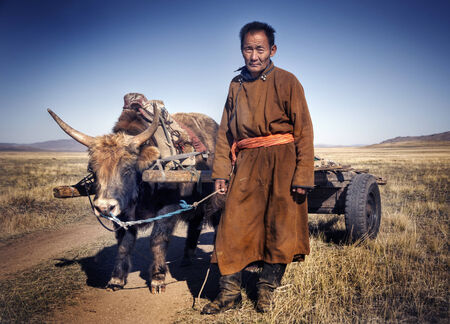independent mongolia: Man walking with a bull with a cart.