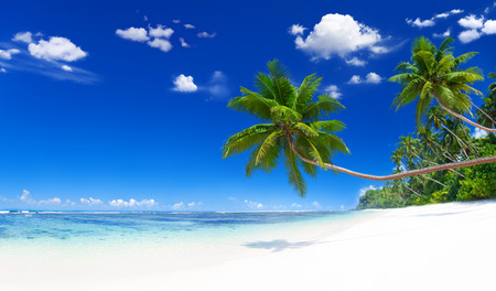바닷가 스톡 콘텐츠