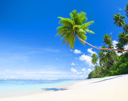 tropical beach panoramic: Summertime Stock Photo