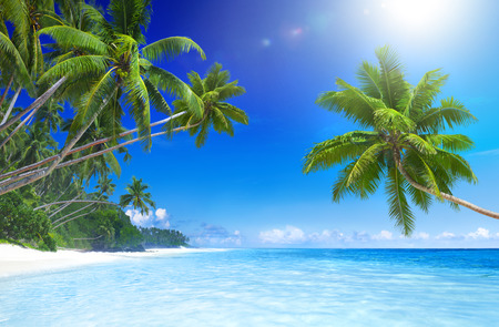 Tropical paradise beach.