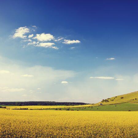 field and sky: Paisaje de verano Flores Campo Cielo Hierba Concepto