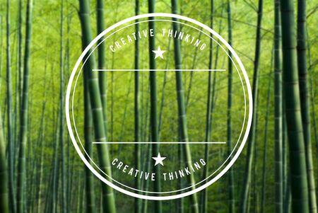 bambu: Bosque de bambú.