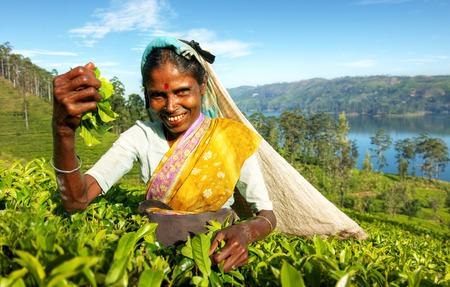 Inheemse Sri Lankaanse thee kiezer Oogsten Concept Stockfoto