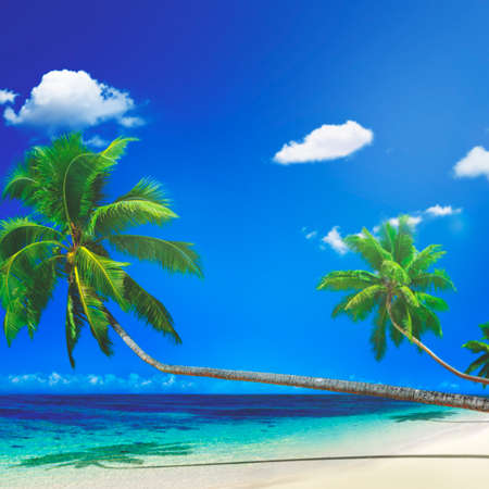 motu: Scenic View Sea Shore Sand Coconut Palm Trees Concept