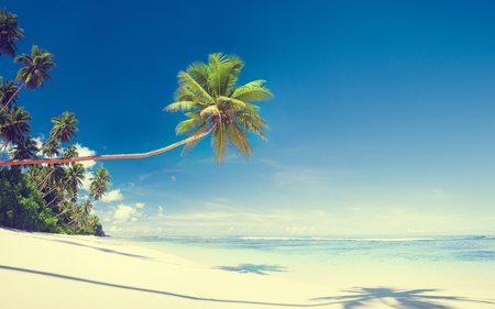 風光明媚な白い砂浜夏ツリーの概念