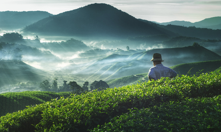scenic: Farmer Tea Plantation Malaysia Agriculture Rural Concept