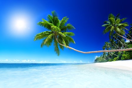 paradise beach: Summer Beach Tropical Paradise Seascape Concept Stock Photo