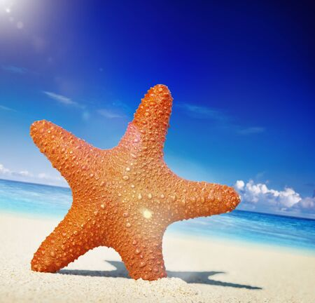 away from it all: Starfish Tropical Beach Sand Summer Island Shell Concept