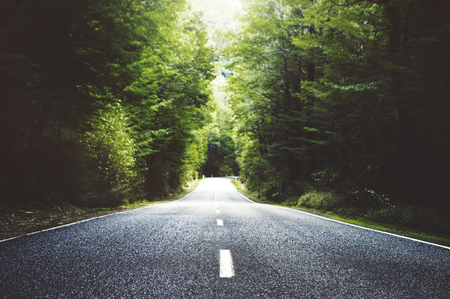 long distance: Summer Country Road With Trees Beside Concept