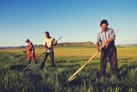 trabajando duro: Mongolian Farmers Working Hard Agricultural Crop Concept