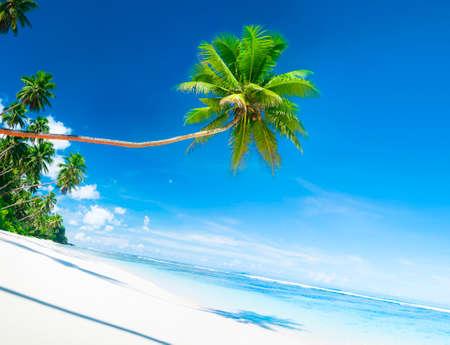 white sand: Scenic White Sand Beach Summer Tree Concept