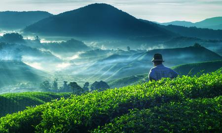 malaysia culture: Farmer Tea Plantation Malaysia Culture Occupation Concept Stock Photo