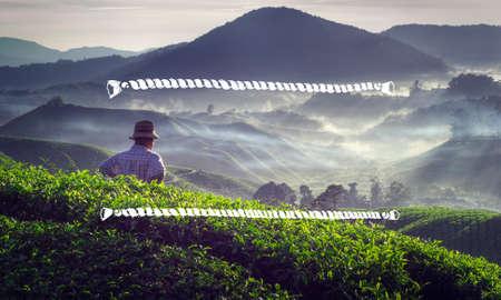 tea crop: Rope Frame Agriculture Harvest Tea Crop Concept Stock Photo