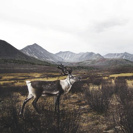 highlands region: Deer Beautiful Nature Scenic Animal Wildlife Rural Concept Stock Photo