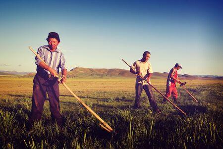 trabajando duro: Mongolia Concepto de cultivos Los agricultores de trabajo duro Agrícola Foto de archivo