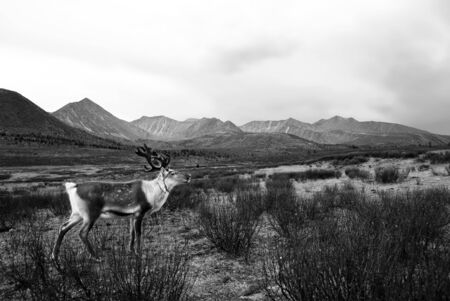 highlands region: Deer Wildlife Tranquil Remote Rural Hill Mountain Concept Stock Photo