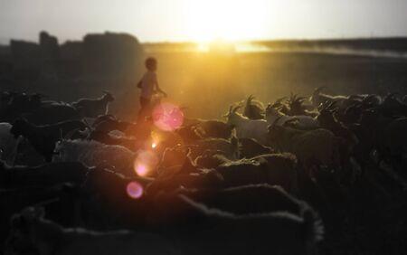 nomadic: Kazakh Herds Goats Milking Gobi Mongolia Nomadic Concept