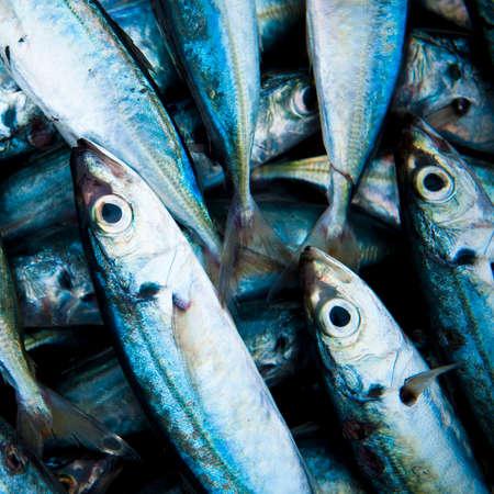 frescura: Escuela de peces capturados Muerto el concepto de frescura