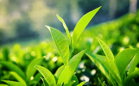 the freshness: Green Leaves Nature Environment Freshness Concept Stock Photo