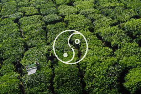 tea plantation: Yin Yang Balance Contrast Opposite Religion Culture Concept Stock Photo