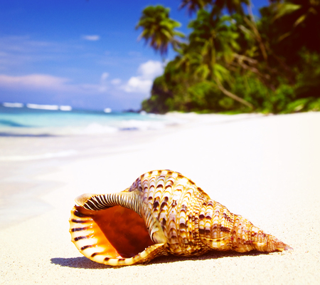 corall: Shell on Tropical Beach Tranquil Scene Concept