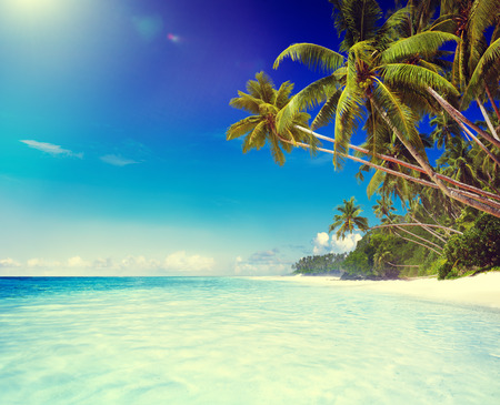 Tropical Paradise Beach Tranquil Scene Concept