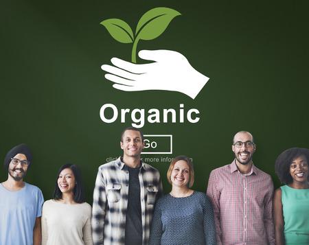 frescura: Los alimentos org�nicos estilo de vida saludable Frescura Concepto Agricultura Natural