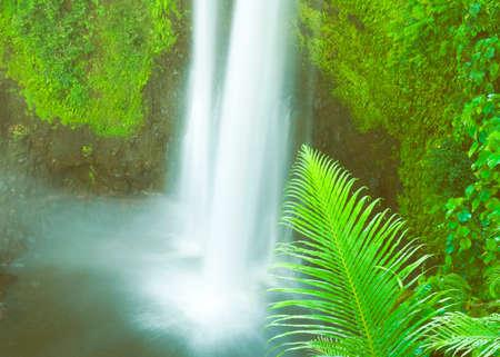 lush foliage: Waterfall Lush Foliage Greenery Cascading Scenic Concept