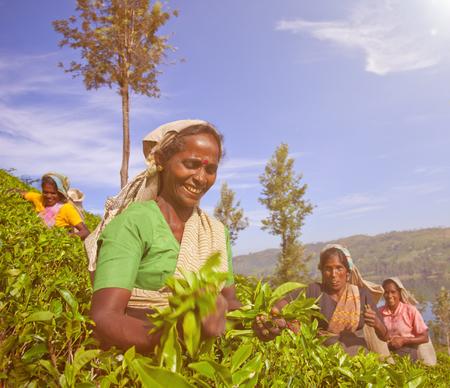 Women Tea Pickers in Sri Lanka Concept